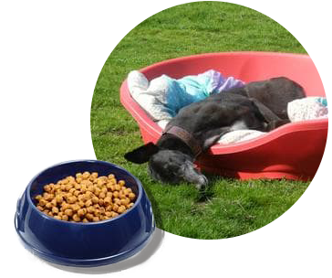 Beds and food for greyhounds