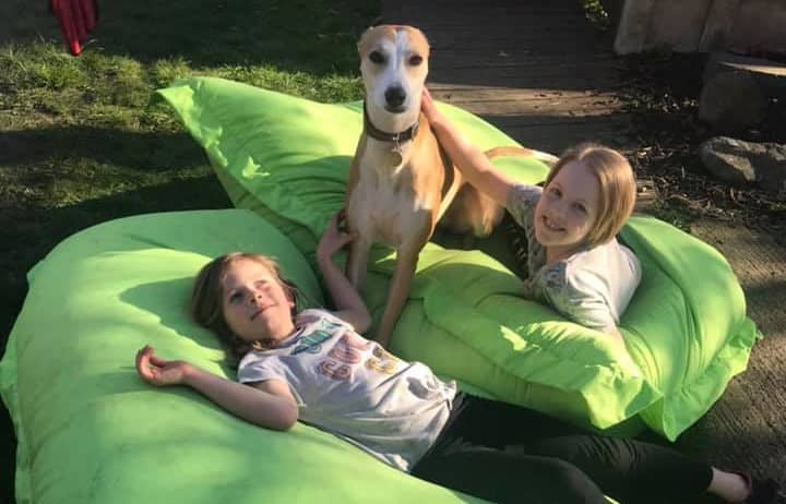 Greyhounds and children