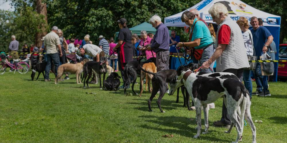 Greyhound Rescue Events