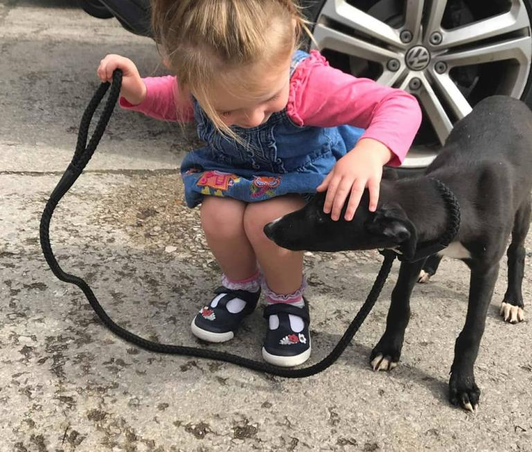 Rehoming greyhounds with children